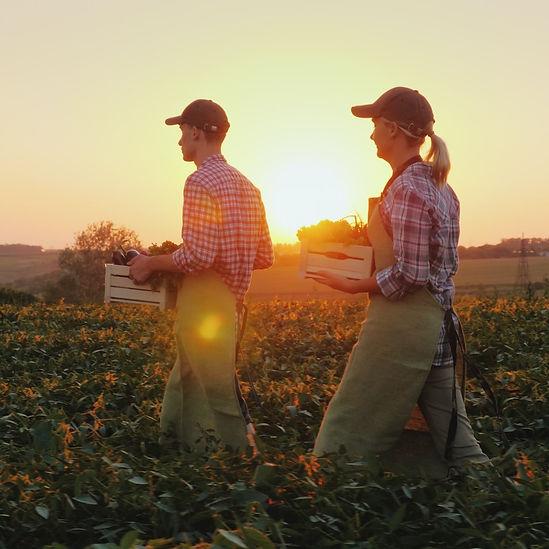 Farmers%20Harvesting%20Crops_edited.jpg