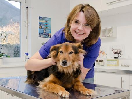 Frauen im tierärztlichen Beruf