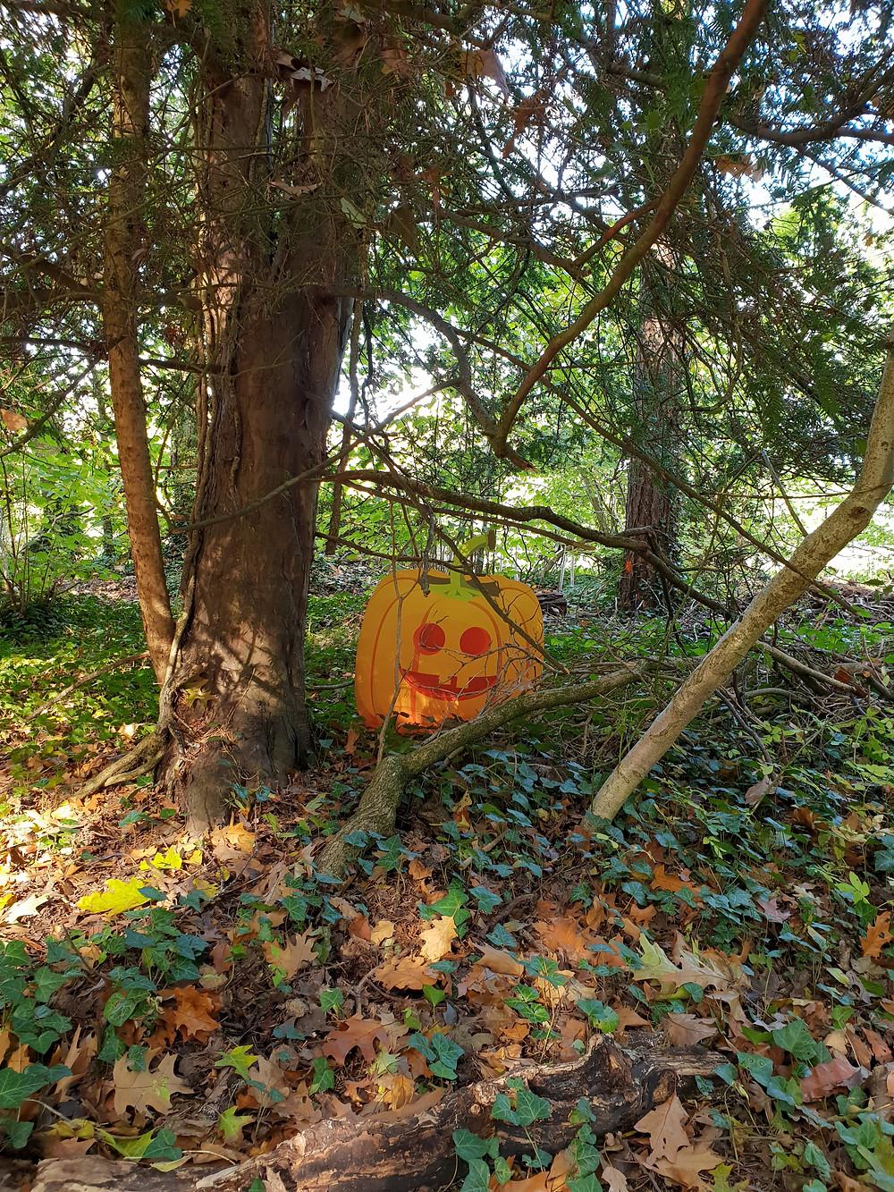 A pumpkin at The Wild Place