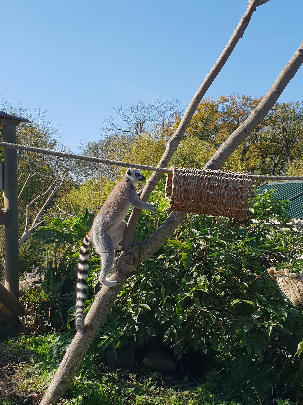 A lemur at The Wild Place