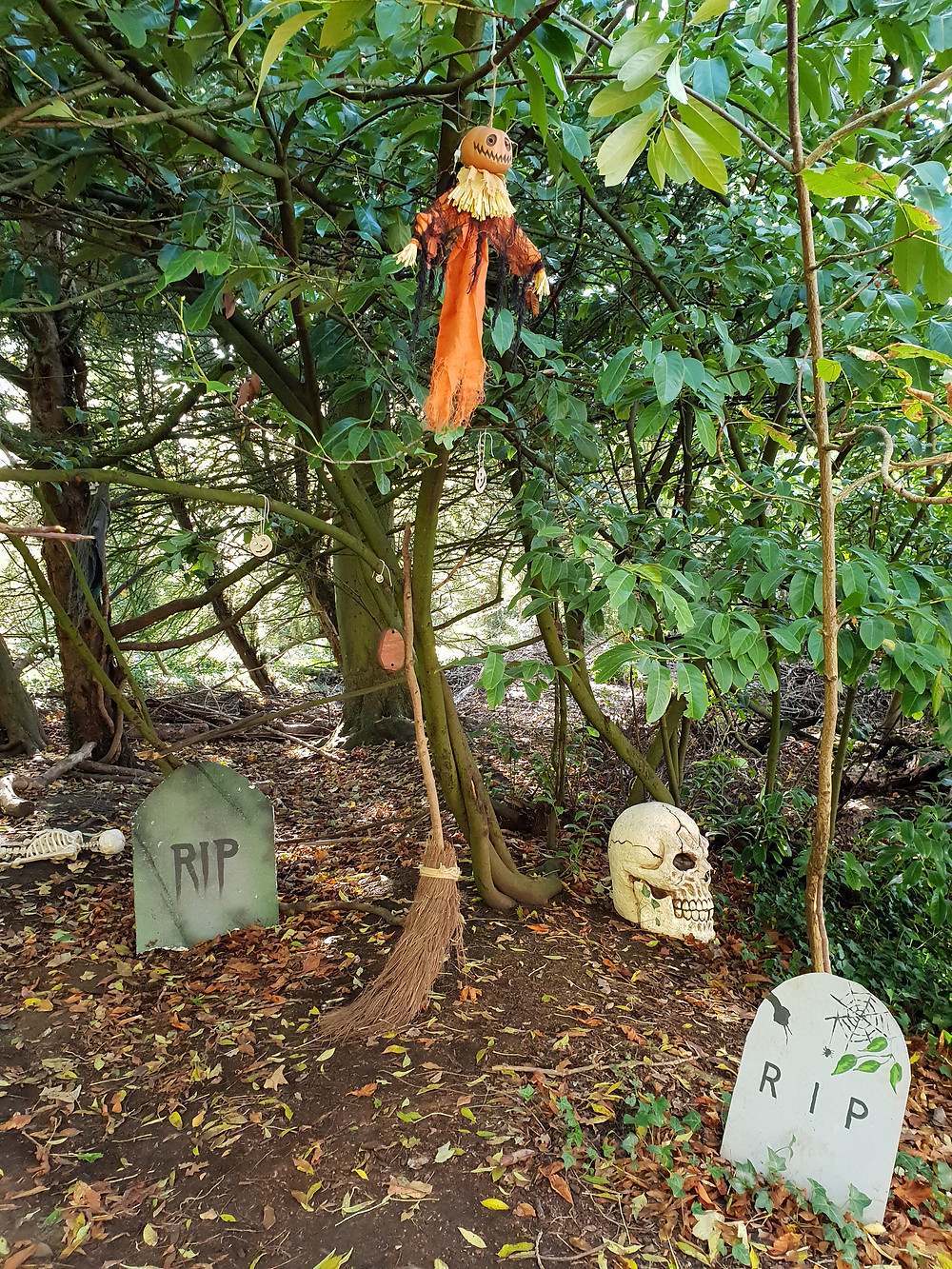 Halloween decorations at The Wild Place