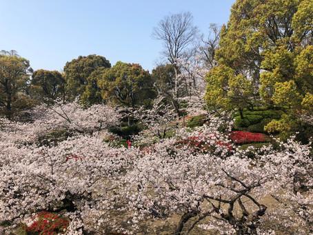 桜の季節♬