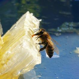 Beekeeping Farms in Georgia