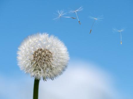 Bye Bye allergies® : une approche énergétique pour éviter les crises d'allergies
