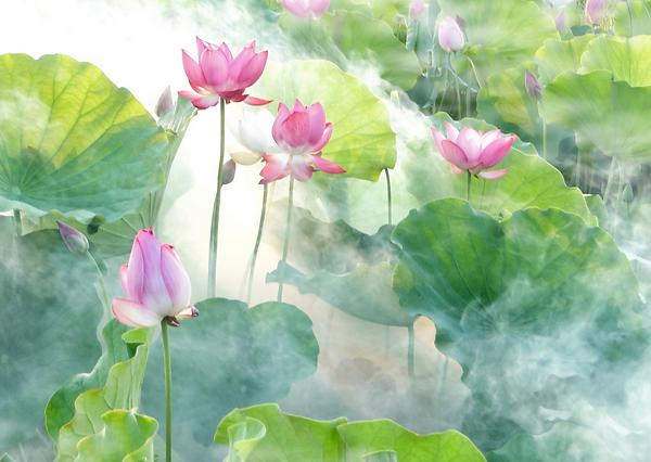 Pouvoir du Lotus.png