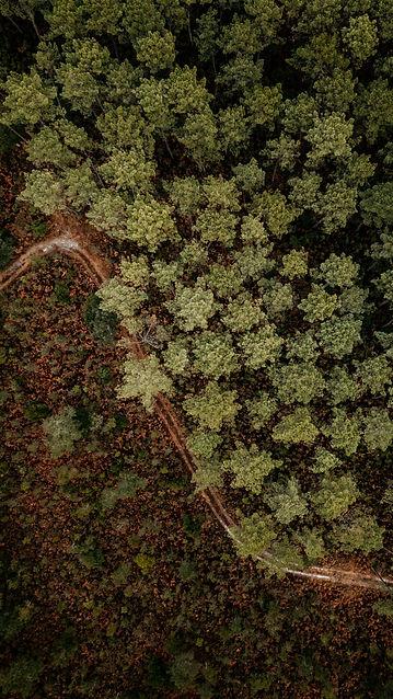 Forêt landes drone.jpg