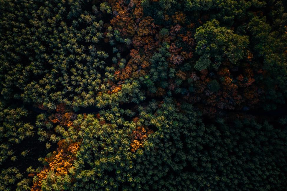 Landes drone paysage-1.jpg
