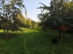 orchard5.jpg