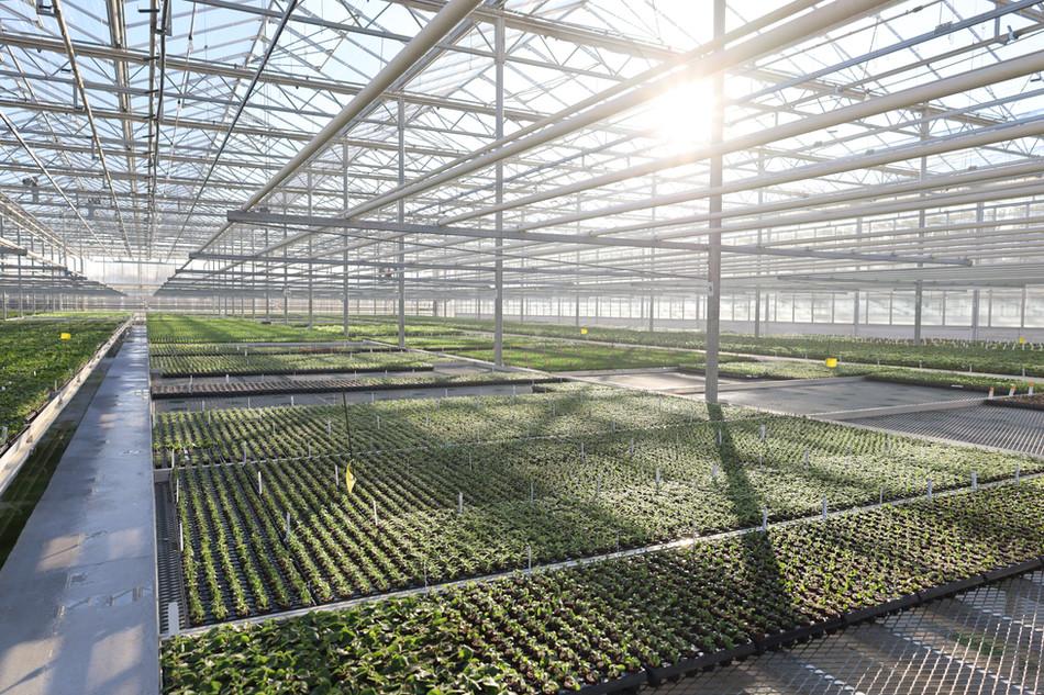 Sunny Greenhouse