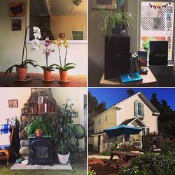 Some of the many plants a guest can enjoy at the Bridge Street Inn  #bridgestreetinn #airbnb #plants