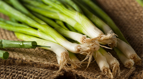 Egyptian Green Onion