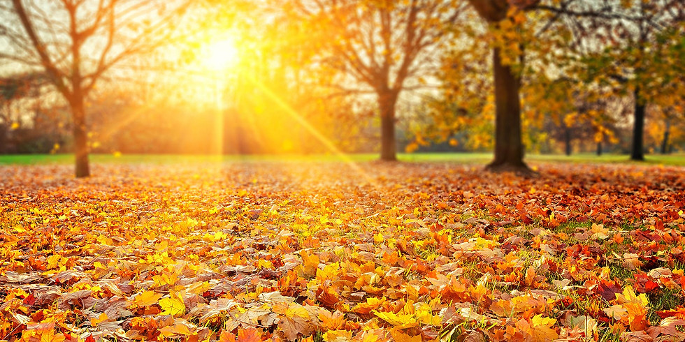 Gathering Qi in the Autumn – NEW Learn about the Solar Terms