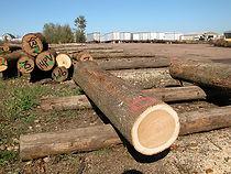 山核桃,美国原木