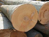 榉木,美国原木