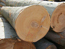 Beech,榉木,美国原木