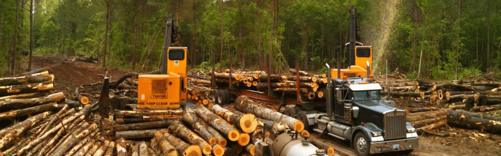 swamp-loggers-cutting-trees-and-preparing-to-haul-logs-away.png