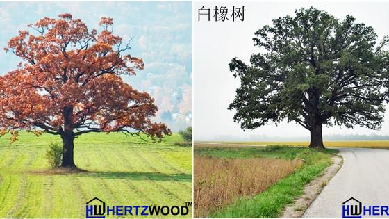 白橡和红橡木的区别和等级划分