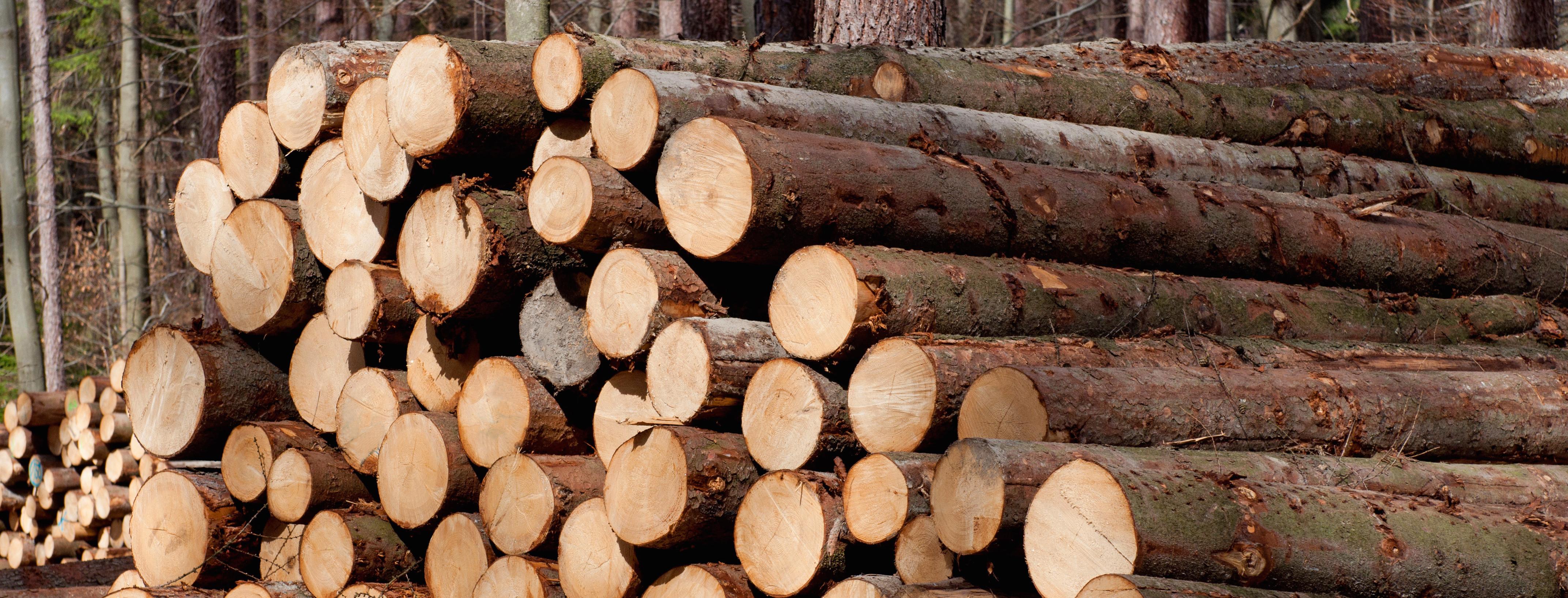 Logging-1.jpg