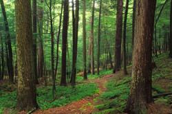 Allegheny-Forest-Forrest-H.-Dutlinger-Natural-Area-Nicholas-A-Tonelli-Flickr.jpg