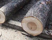 桦木,美国原木