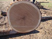 红橡,美国原木
