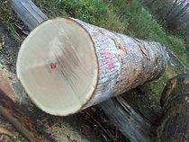 白橡,美国原木