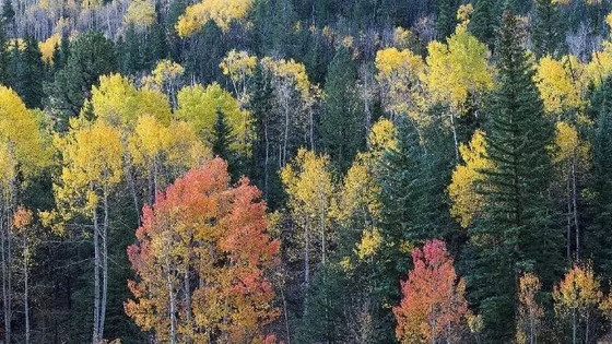 带你认识北美的十大硬木