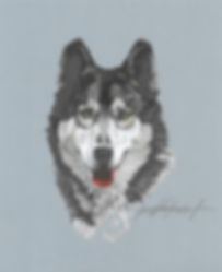 Wolf - colored pencil drawing
