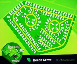 Flamingoland Beech Grove
