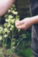 kaleflowers.jpeg