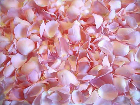 flower-671933_1280.jpg