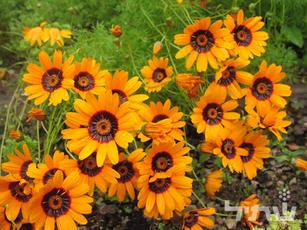 פרחי עונה חורפיים