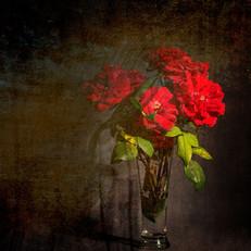 Jarrón de rosas rojas con velo