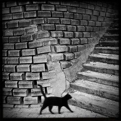 """Gato negro"""