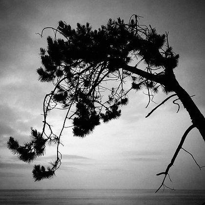 """""""Árbol de mar"""""""