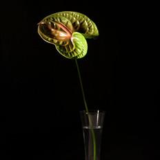 Florero con flor exótica