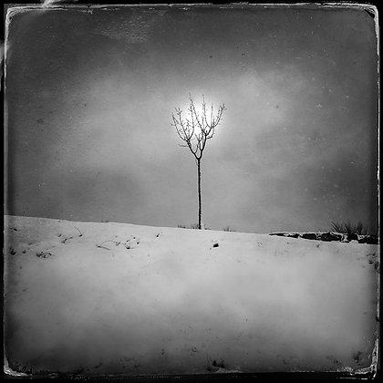 """""""Sol de invierno"""""""