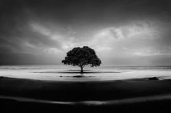 Other Landscapes
