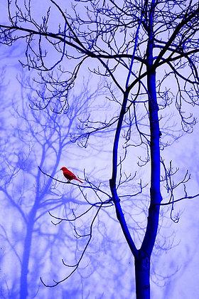 """""""Pájaro rojo"""""""