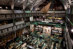Oxford_Pitt_Rivers_Museum_-_0269