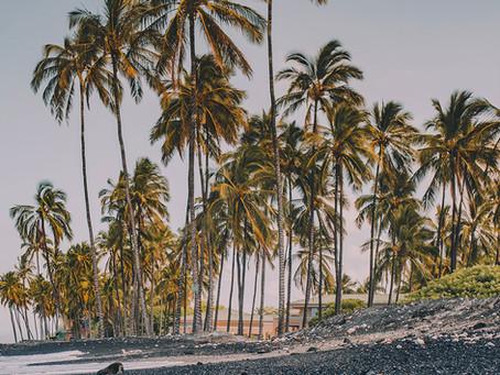 El secreto de las palmeras