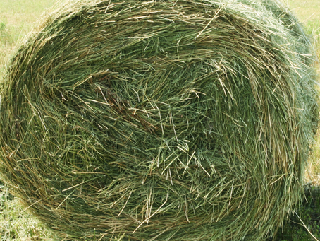 Nitrogen not the solution when producing quality hay