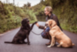 me and labs on road v3.jpg