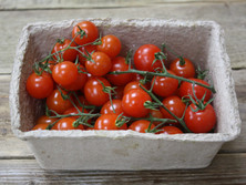cherry-tomatoes-riverford.jpg
