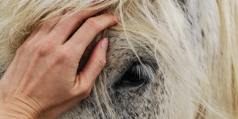 Really Listening to Your Horse, Really Hearing the Humans in Your Life