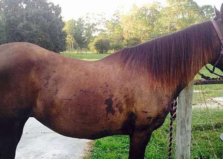 Importance of Developing Your Horse's Core