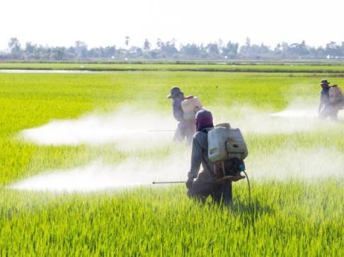 Highly Hazardous Pesticides in Vietnam: A Situational Analysis