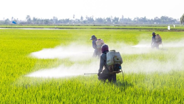 Pesticides spraying in Vietnam