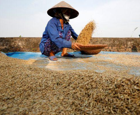 Vietnam's agricultural sector at a crossroads