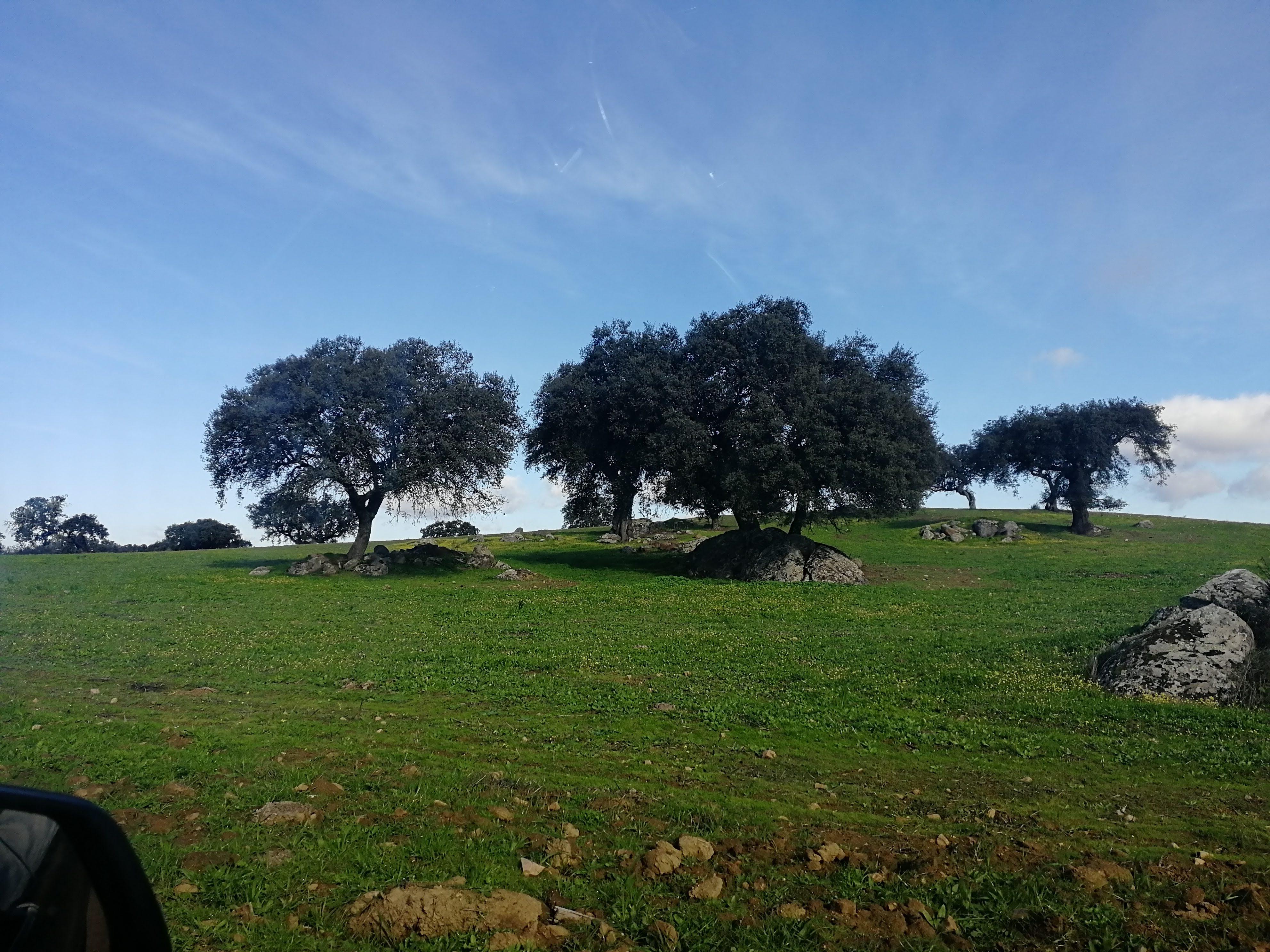 Árvores Isoladas